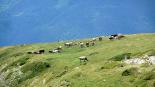 Paisatges de la Vall de Ribes Vaques camí de la coma de Planès
