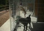 Inauguració del Refugi d'Animals del Ripollès