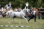 El 2009 al Ripollès, en 100 imatges Arabequus 2009 (Sant Joan de les Abadesses, 29 d'agost) Foto: Adrià Costa