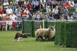 Resum 2011 Concurs d'Habilitat amb Gossos d'Atura de Ribes. Foto: Arnau Urgell