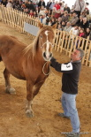 Resum 2011 Concurs Comarcal del Cavall Pirinenc a Ripoll. Foto: Xevi Mas