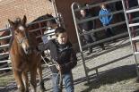 El 2012 al Ripollès, en 125 imatges II Concurs Comarcal del Cavall Pirinenc de Ripoll. Foto: Adrià Costa