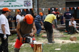 XVII Concurs Tallada Troncs Vallfogona