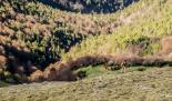 Cursa circular Vall de Ribes Extrem Sèries Foto: Sergi Colomé