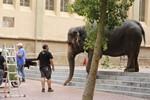 Un elefant es passeja per Terrassa
