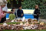 Festa del Bolet de Sant Boi de Lluçanès