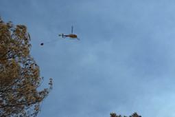Conseqüències de l'incendi forestal de Sant Feliu Sasserra