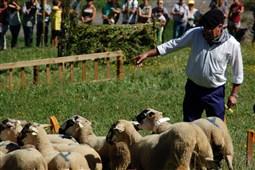 53è Concurs de Gossos d'Atura de Castellar de n'Hug