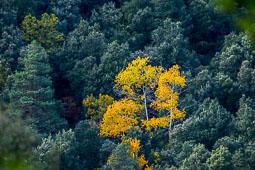 Els colors de la tardor Foto: Josep Maria Montaner