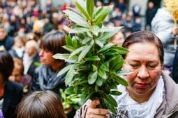 Les millors fotos de la setmana de Nació Digital <a href='http://www.naciodigital.cat/garrotxa/galeria/628/pagina1/dia/ram'>Benedicció de Rams a Olot.</a></br> Foto: Martí Albesa