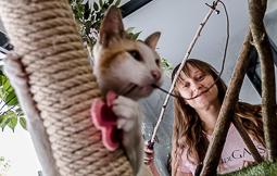 Les millors fotos de la setmana de Nació Digital <a href='http://www.naciodigital.cat/noticia/112351/fer/cafe/envoltat/gats/al/cor/gracia'>El 22 de juliol obrirà l'Espai de Gats, un local que n'oferirà en adopció i que recorda un «cat cafe» japonès.</a></br> Foto: Adrià Costa