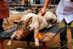 Les millors fotos de la setmana de Nació Digital Festa del Porc i la Cervesa de Manlleu.</br> Foto: José M. Gutiérrez