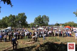 Les millors fotos de la setmana de Nació Digital Fira de l'Hostal del Vilar.  Foto: Josep M. Costa