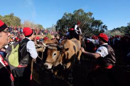 Les millors fotos de la setmana de Nació Digital Festa del Pi de Centelles. Foto: Josep M. Montaner