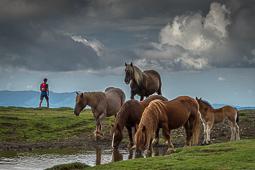 Les millors fotos de la setmana de Nació Digital Molló Trail, Camí de Retirada.Foto: Josep M. Montaner