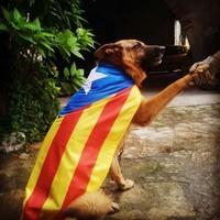 Via Catalana - Fotos dels lectors Rosa Font - Flaçà