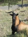 Visita al Zoo del Pirineu