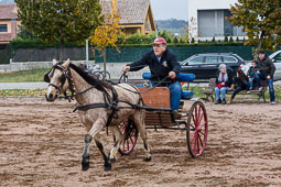 Festa Major de Gurb 2014: carros i cavalls