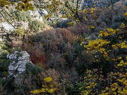 La tardor, vista pels lectors d'Osona.com Cantonigròs. Foto Josep Serra