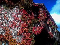 La tardor, vista pels lectors d'Osona.com Tavertet. Foto: Laura Alberch