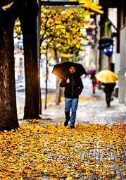 La tardor, vista pels lectors d'Osona.com Vic. Foto: Isidre Rifà