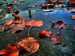 La tardor, vista pels lectors d'Osona.com Vic. Foto: Núria Jiménez