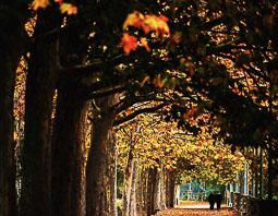 La tardor, vista pels lectors d'Osona.com Manlleu. Foto: Conxita Rifà