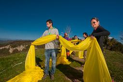El groc oneja al Collsacabra 2014