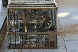 Concurs d'Ocells de Taradell