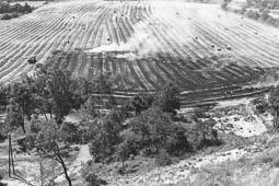 Estimats bombers (1978-94) Incendi agrícola a Sentfores. Foto: Arxiu La Marxa
