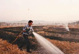 Estimats bombers (1978-94) Joan Anglada, del parc de Torelló en un incendi d'un camp de blat. Foto: Arxiu La Marxa