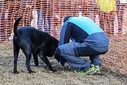 Concurs de gossos tofonaires de la Fira de la Tòfona de Centelles