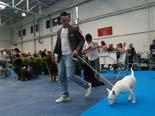Exposició Nacional Canina Ciutat de Vic, 2010
