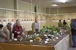Exposició: «Terra de Bolets» a St. Julià de Vilatorta