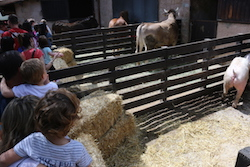 Festa de la Primavera 2015 a la masia de Can Deu de Sabadell Una família mira els animals de la granja.