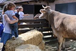 Festa de la Primavera 2015 a la masia de Can Deu de Sabadell Una família mira la vaca de la granja.