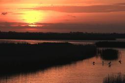 Paisatges del Delta