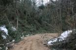 Efectes de la nevada als boscos catalans Els efectes de la nevada a la Selva. Foto: Consorci Forestal de Catalunya