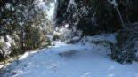 Efectes de la nevada als boscos catalans Els efectes de la nevada a Collserola. Foto: Àlex Maymó
