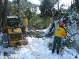 Efectes de la nevada als boscos catalans Els efectes de la nevada a les Gavarres. Foto: Josep Ponjoan ADF Gavarres