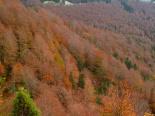 Paisatge i meteorologia de novembre al Ripollès Paisatges de tardor a coll de Jou (4 de novembre). Foto: Antonina Coromina