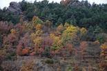 Paisatge i meteorologia de novembre al Ripollès Paisatge de tardor a Ribes de Freser (17 de novembre). Foto: Jordi Romero