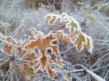 Paisatge i meteorologia de desembre al Ripollès Glaçada a Ripoll (4 de desembre). Foto: Antonina Coromina