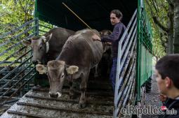 El resum del 2014 al Ripollès, en imatges Fira del Bestiar de Ribes de Freser. Foto: Adrià Costa