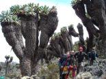 Els 7 cims d'Albert Bosch Ascens al Kilimanjaro