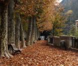 L'esclat de la tardor, en imatges Passeig d'Àngel Guimerà de Ribes de Freser. Foto: Laia Deler