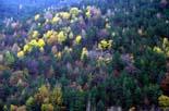 L'esclat de la tardor, en imatges Boscos de Toses. Foto: Joan Parera