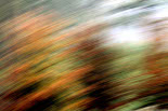 L'esclat de la tardor, en imatges Tardor artística a Camprodon. Foto: Adrià Costa