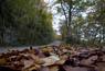 L'esclat de la tardor, en imatges Boscos de Llaers. Foto: Adrià Costa