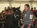 II Concurs Nacional del Cavall Pirinenc Català (matí)
